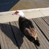 dlv_top-team_lehrgang_monte_gordo_2008_1016_20100117