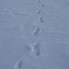 skilanglauf_trainingslager_2009_vuokatti_finnland_1005_20100124
